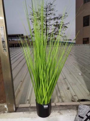 דשא טרופי
